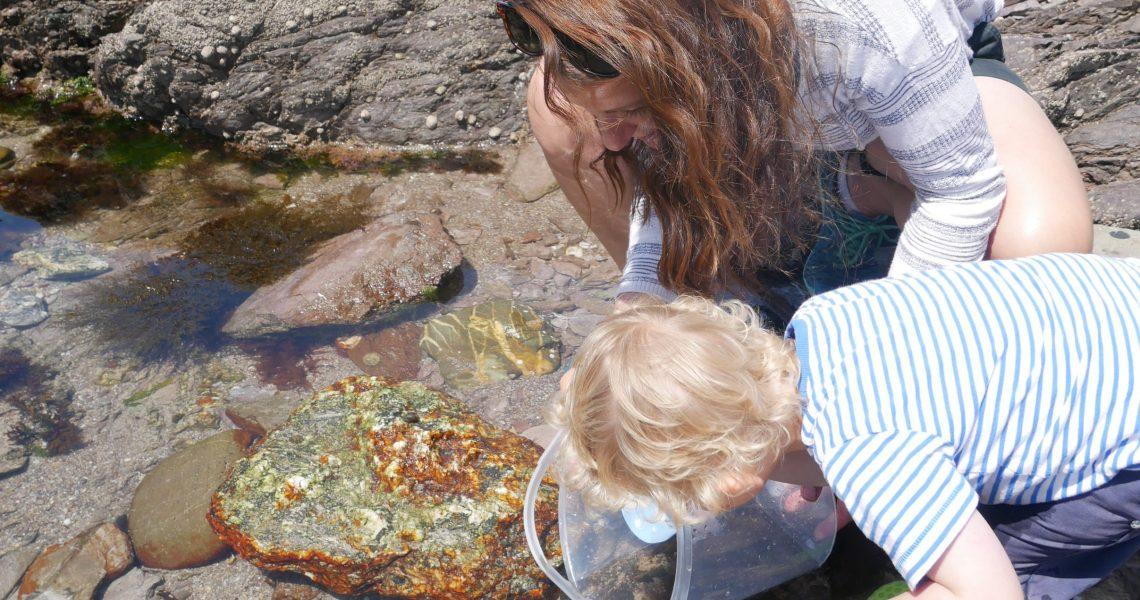 looking in rock pools